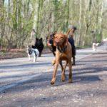 outlet-hondenuitlaatservice-trimsalon