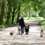 Wandelen met puppies of oudere honden in alle rust voor oudere honden