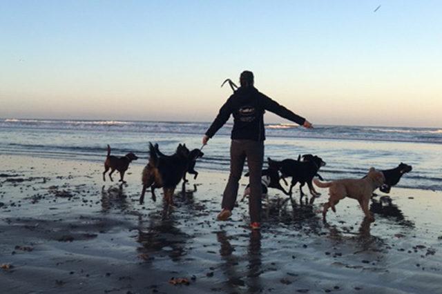 Strandwandelingen met Outlet hondenuitlaatservice
